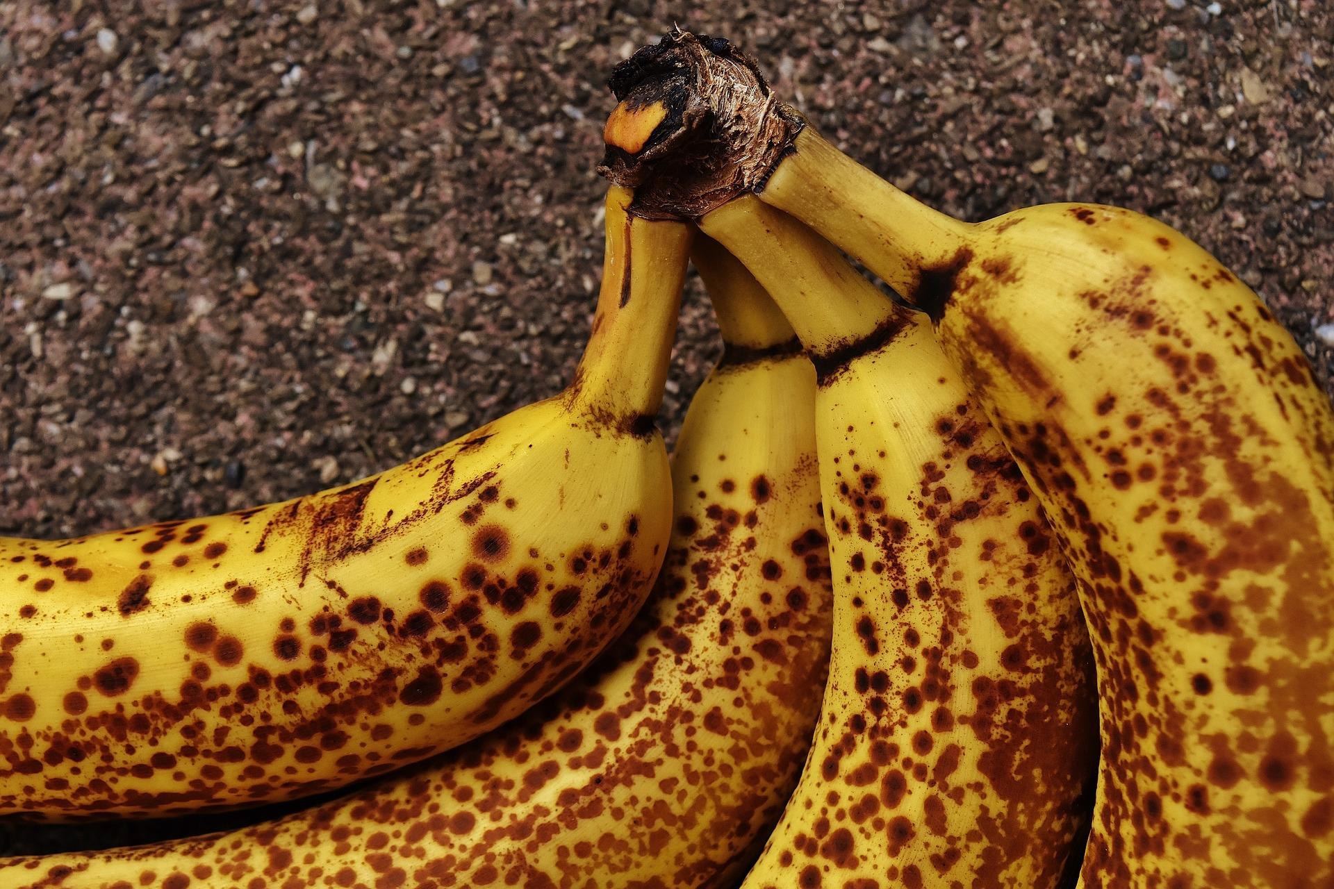 Un racimo de bananas marrones.