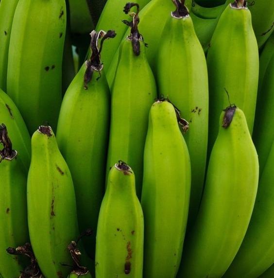 Un racimo de bananas verdes.