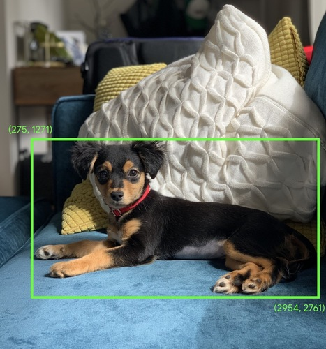 Photograph of a dog sitting on a sofa. A green bounding box           with top-left coordinates of (275, 1271) and bottom-right           coordinates of (2954, 2761) circumscribes the dog's body