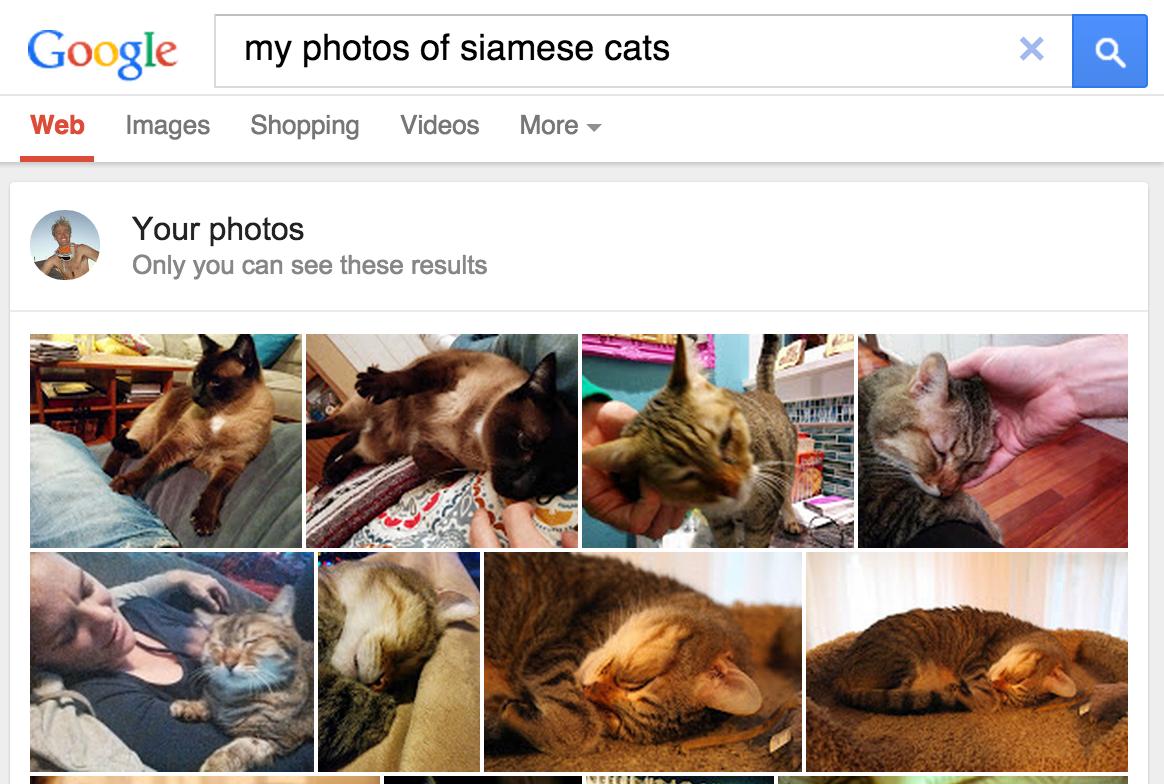 captura de pantalla de GoogleFotos en el que se muestra una búsqueda de gatos siameses